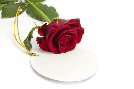 The rose lies on a card on the isolated white background