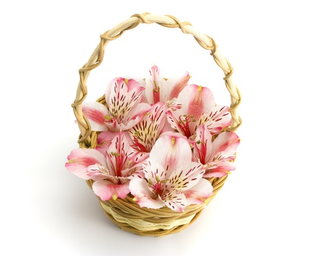 Basket of orchids isolated on white background photo