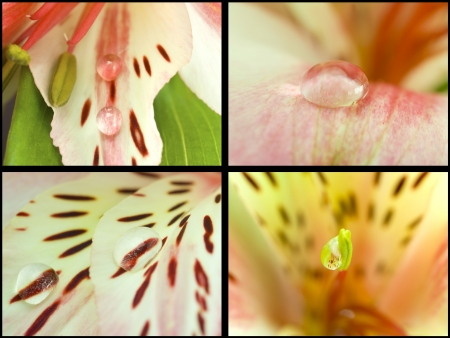 Collection. Taking Close-up orchids