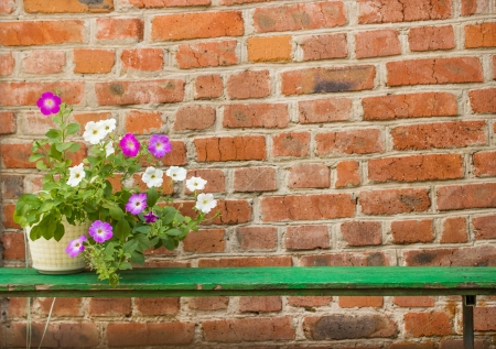 Petunia in a pot on a brick wall background Stock Photo - 21593679