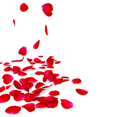 red rose border: Petals of roses fall on a floor.
