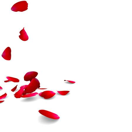 Petals of roses fall on a floor.