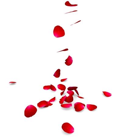 Pétales de roses tombent sur un sol.