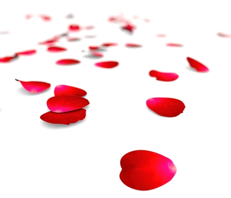 red rose border: Petals of roses on a floor.