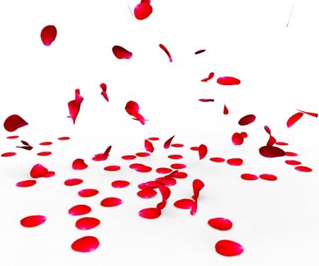 절연 흰색 배경에 표면에 떨어지는 장미 꽃잎