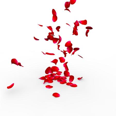 격리 된 흰색 배경에 표면에 떨어지는 장미 꽃잎