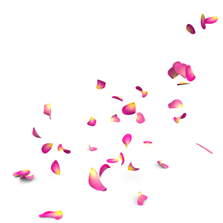 falling in love: Rose petals fall to the floor. Isolated background