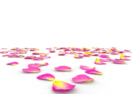 Rose petals scattered on the floor on an isolated background
