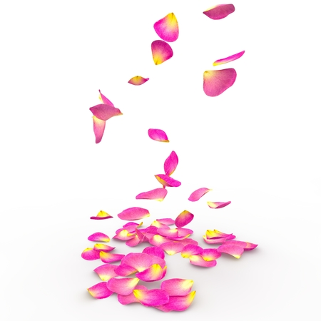 Rose petals fly and fall to the floor on an isolated background