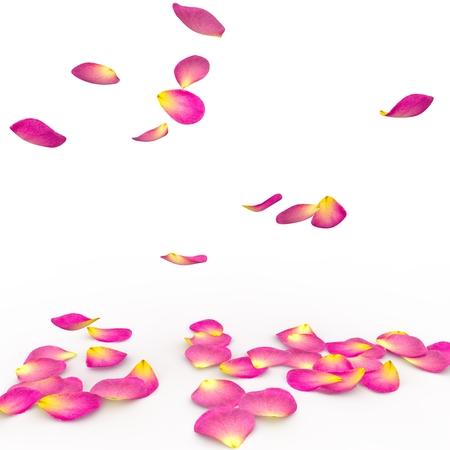 Rozenblaadjes op de grond vallen. Geïsoleerde achtergrond Stockfoto
