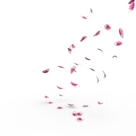 Tulip petals fall to the floor. Isolated background. 3D render Stock Photo