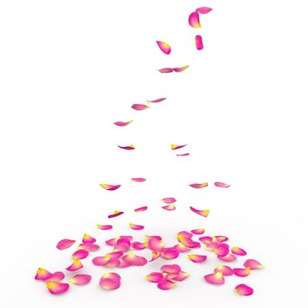 Rozenblaadjes vallen op de vloer. Geïsoleerde achtergrond Stockfoto