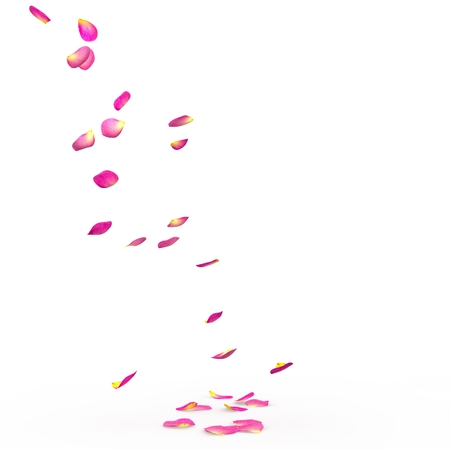 rose petal: Rose petals fall to the floor. Isolated background. 3D Render