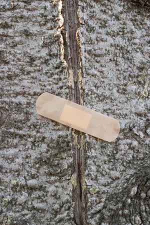 arbol de problemas: Concepto - el árbol de problemas con las grietas. Árboles cuidado