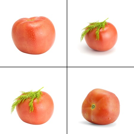Collection. Tomato and fennel on the white isolated background Stock Photo