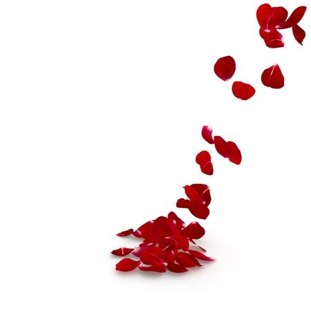 De donkerrode bloemblaadjes kwamen vliegend op de vloer. Geïsoleerde achtergrond. 3D render Stockfoto