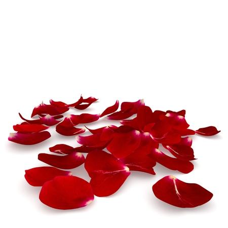 꽃잎 진한 빨간색 장미 바닥에 누워. 격리 된 배경입니다. 3D 렌더링
