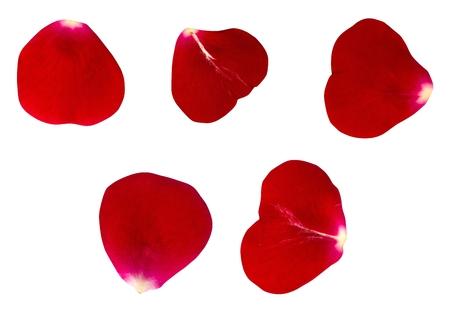 어두운 붉은 장미 꽃잎의 집합입니다. 격리 된 배경