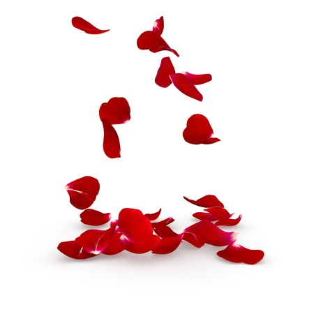 rose petals: Petals dark red rose flying on the floor. Isolated background. 3D render