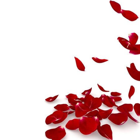 Petals dark red rose flying on the floor. Isolated background. 3D render