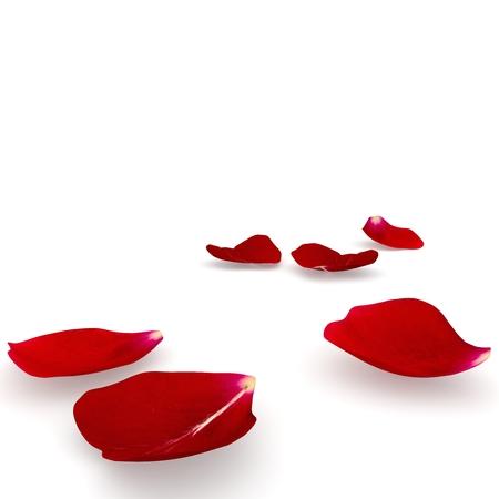 꽃잎 어두운 빨간색 바닥에 누워 상승했다. 격리 된 배경입니다. 3D 렌더링