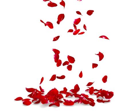 장미 꽃잎을 바닥에 떨어진다. 격리 된 배경입니다. 3D 렌더링