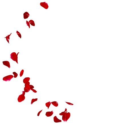 濃いローズの花びらは、オリジナル ストーリーです。本文や写真のための場所があります。孤立した白い背景。3 D のレンダリング