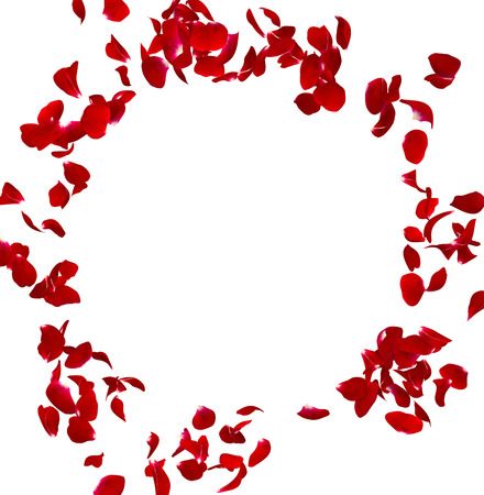 Blütenblätter dunkle Rosen in einem Kreis fliegen. Es gibt einen Platz für Ihren Text oder Fotos. Isolierte weißem Hintergrund. 3D übertragen
