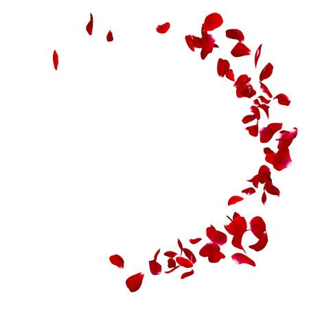 어두운 장미의 꽃잎은 원래의 이야기입니다. 당신의 텍스트 또는 사진에 대 한 장소가있다. 격리 된 흰색 배경. 3D 렌더링