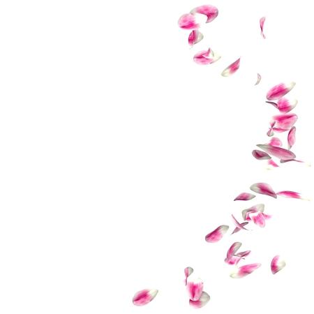 튤립 꽃잎 격리 된 흰색 배경에 동그라미에 날고있다. 텍스트 또는 사진을위한 장소가 있습니다.