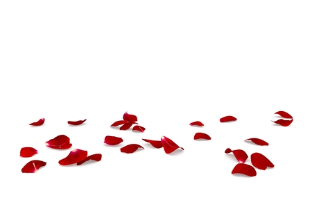 Red rose petals scattered on the floor. White isolated background Фото со стока