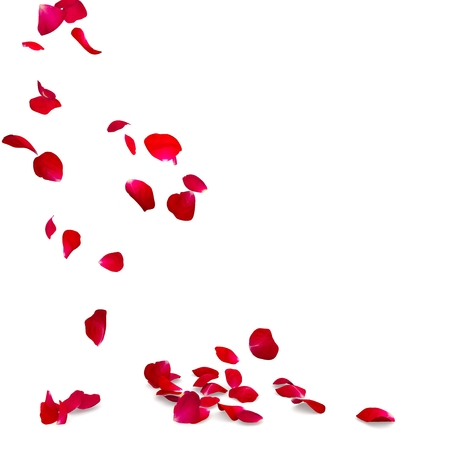 Pétales de rose tombent sur le sol. Isolated background
