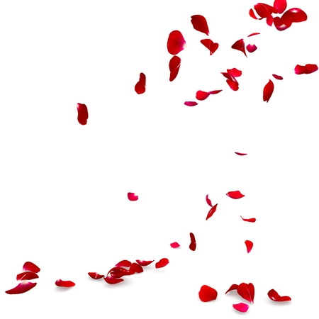 rose petals: Rose petals fall to the floor. Isolated background. 3D render