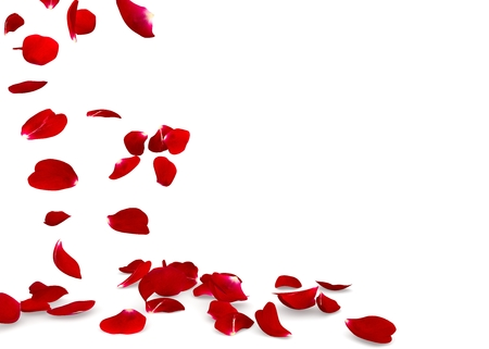 Rose petals fall to the floor. Isolated background. 3D render