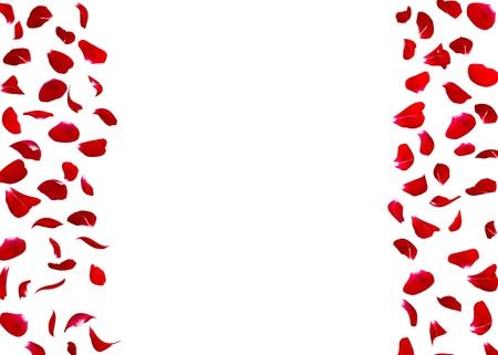 rosas rojas: pétalos de rosa caen al suelo. fondo aislado. Hay un espacio libre para tus fotos o texto