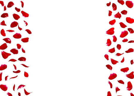 red roses: Rose petals fall to the floor. Isolated background. There is a free space for Your photos or text