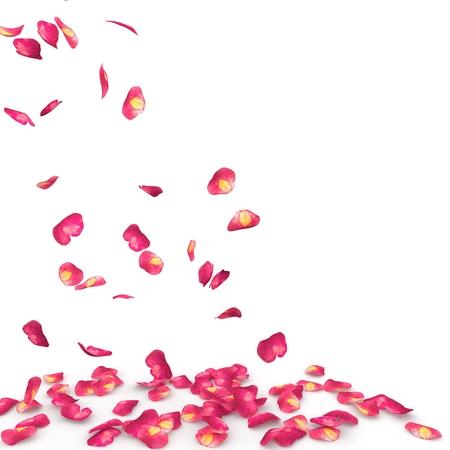 Rose bloemblaadjes gespikkelde val op de vloer. Geïsoleerde achtergrond