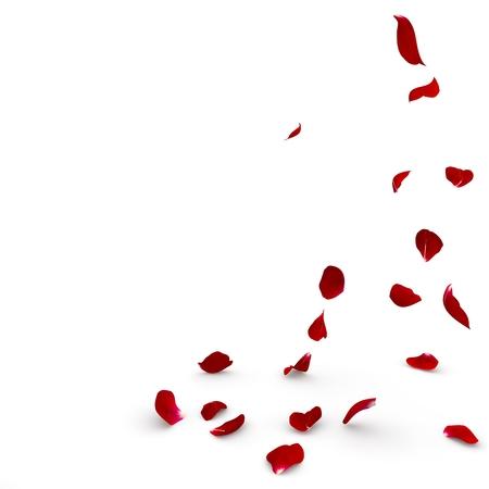 장미 꽃잎을 바닥에 떨어진다. 격리 된 배경
