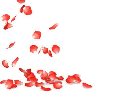 Rote Rose auf dem Boden fliegen Blütenblätter. Isolierte weißem Hintergrund