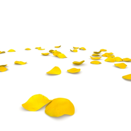 Yellow rose petals flying on the floor. Isolated white background