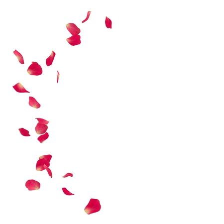 Pink rose petals scattered on the floor in a semi-circle. There is a place for Your text or photo Stock Photo