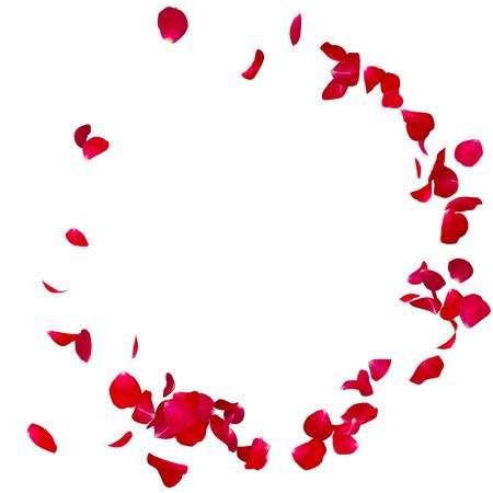 Rote Rose auf dem Boden in einem Halbkreis verstreut Blütenblätter. Es gibt einen Platz für Ihren Text oder Foto Standard-Bild - 65998596