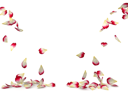 Red-white roses fall to the floor on two sides. Isolated background