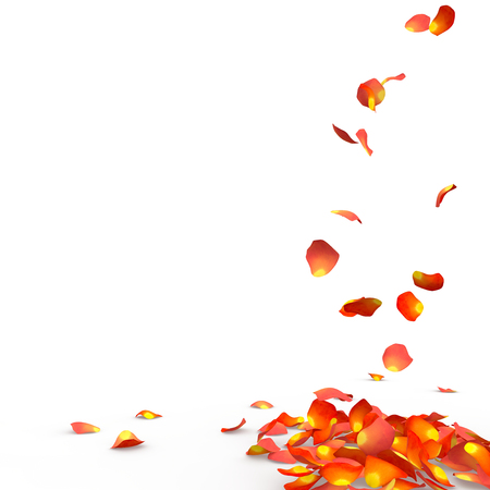 Rose petals fall to the floor. Isolated background