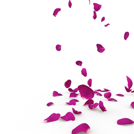 Violet rose petals fall to the floor. Isolated background