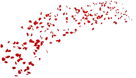 The petals of a dark red rose fly far into the distance. White isolated background. Stock Photo