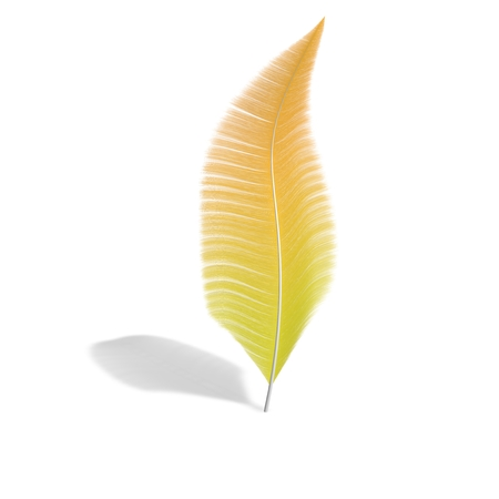 One feather on a white isolated background. 3D illustration