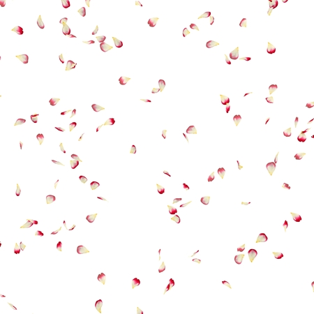 Rose petals fly in the air. White isolated background 스톡 콘텐츠