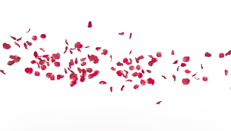 The petals of a red rose fly far into the distance. White isolated background.