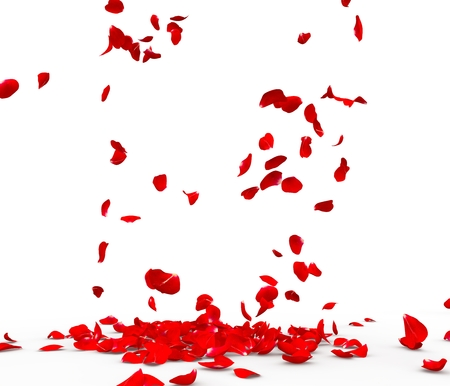 Many rose petals fall on the floor. Isolated on white background 写真素材